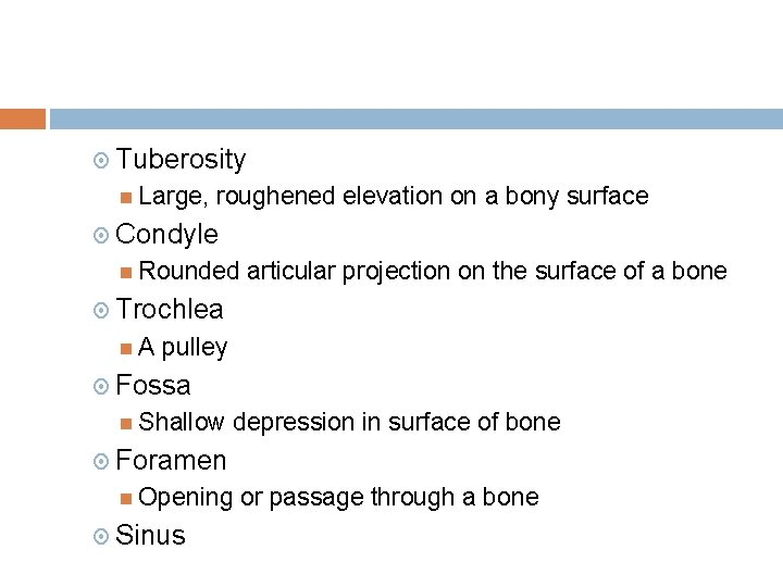 Tuberosity Large, roughened elevation on a bony surface Condyle Rounded articular projection on