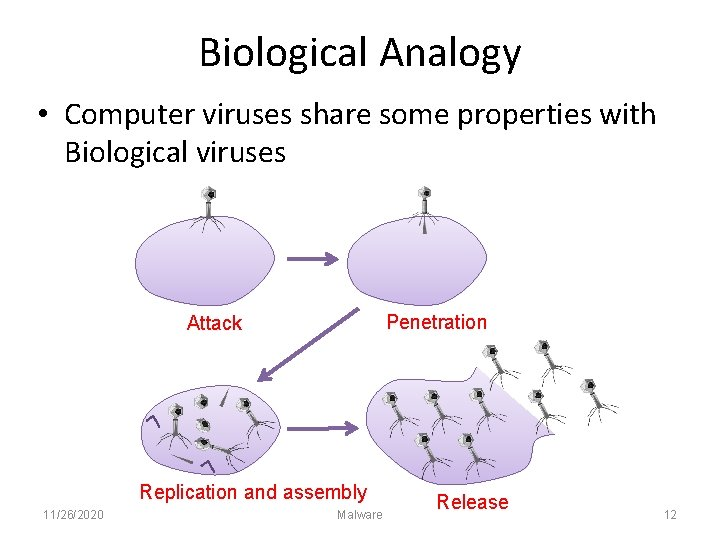 Biological Analogy • Computer viruses share some properties with Biological viruses Penetration Attack Replication
