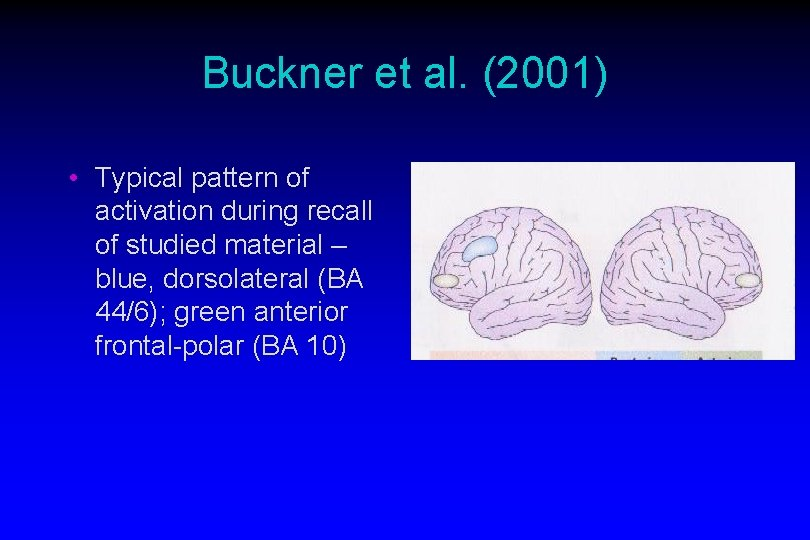 Buckner et al. (2001) • Typical pattern of activation during recall of studied material