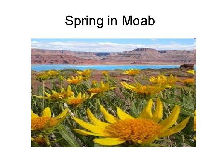 Spring in Moab