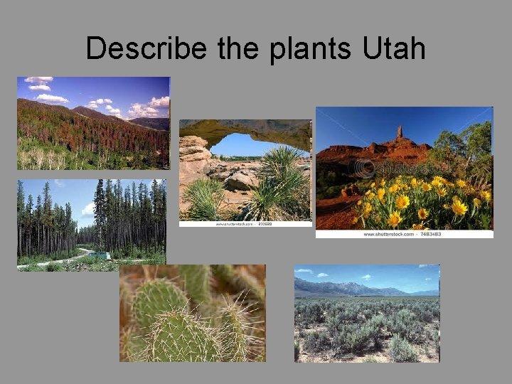 Describe the plants Utah