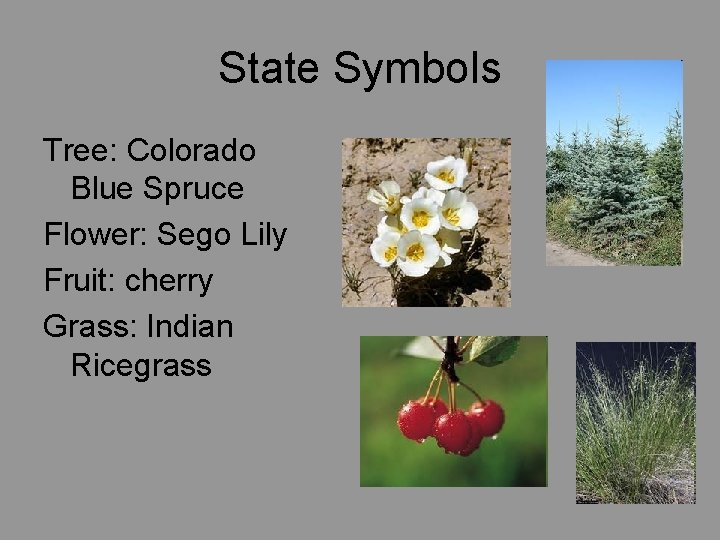 State Symbols Tree: Colorado Blue Spruce Flower: Sego Lily Fruit: cherry Grass: Indian Ricegrass