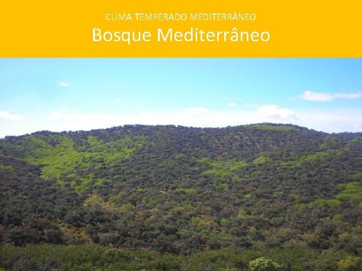 CLIMA TEMPERADO MEDITERR NEO Bosque Mediterrâneo