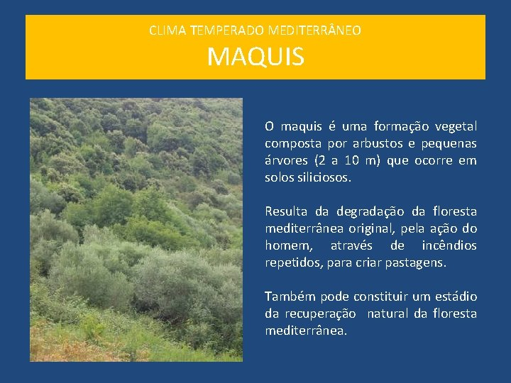 CLIMA TEMPERADO MEDITERR NEO MAQUIS O maquis é uma formação vegetal composta por arbustos