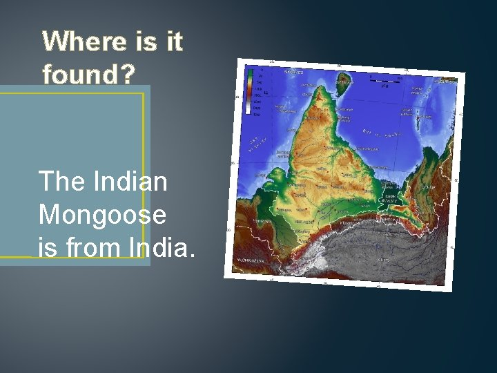 Where is it found? The Indian Mongoose is from India.