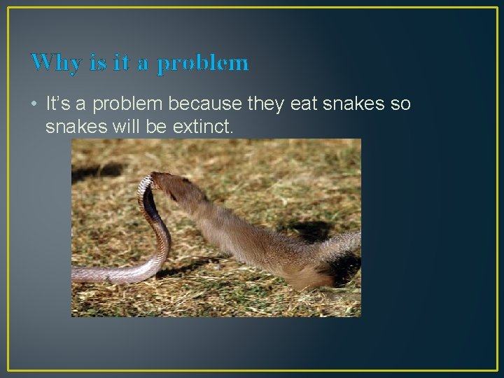 Why is it a problem • It's a problem because they eat snakes so