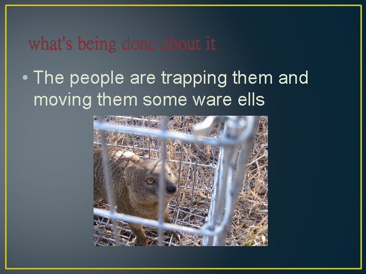 what's being done about it • The people are trapping them and moving them