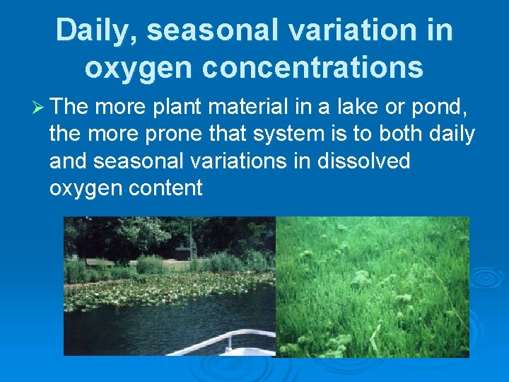 Daily, seasonal variation in oxygen concentrations Ø The more plant material in a lake