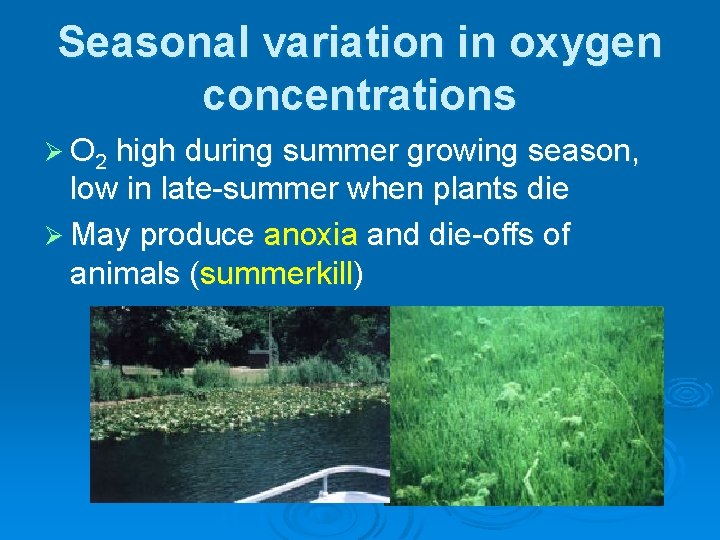 Seasonal variation in oxygen concentrations Ø O 2 high during summer growing season, low