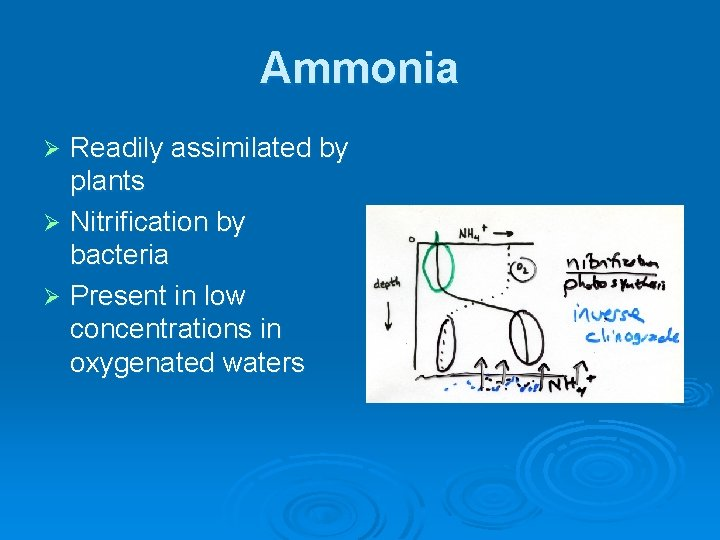 Ammonia Readily assimilated by plants Ø Nitrification by bacteria Ø Present in low concentrations