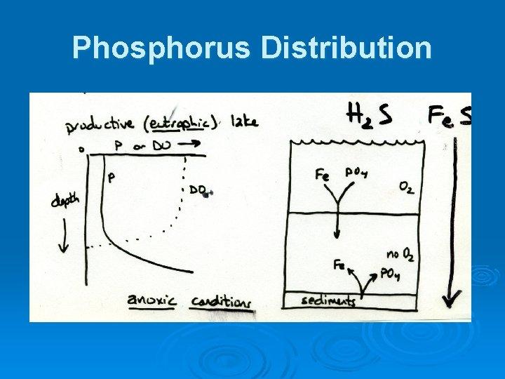 Phosphorus Distribution