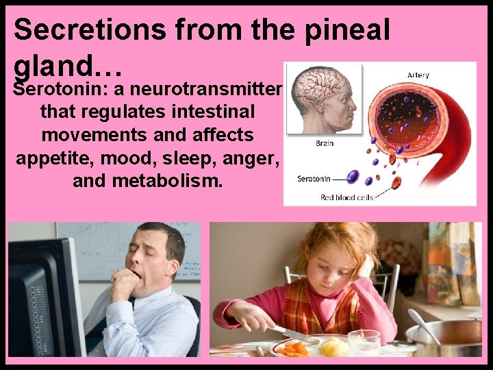 Secretions from the pineal gland… Serotonin: a neurotransmitter that regulates intestinal movements and affects