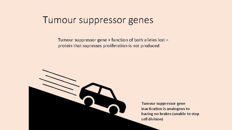 Tumour suppressor genes Tumour suppressor gene + function of both alleles lost = protein