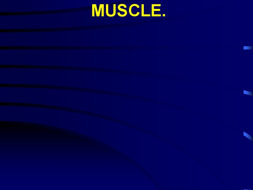 MUSCLE.
