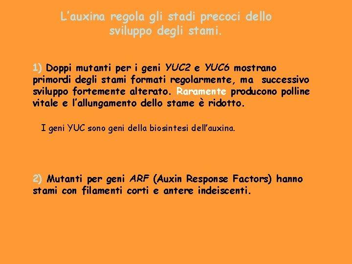 L'auxina regola gli stadi precoci dello sviluppo degli stami. 1) Doppi mutanti per i