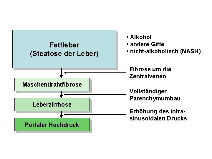 Fettleber (Steatose der Leber) • Alkohol • andere Gifte • nicht-alkoholisch (NASH) Fibrose um