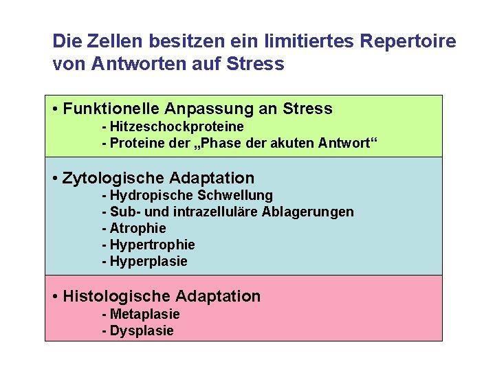 Die Zellen besitzen ein limitiertes Repertoire von Antworten auf Stress • Funktionelle Anpassung an