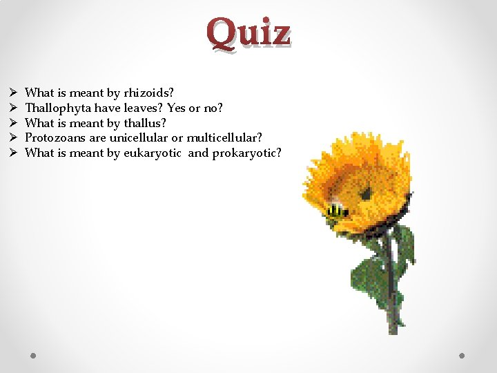 Quiz Ø Ø Ø What is meant by rhizoids? Thallophyta have leaves? Yes or