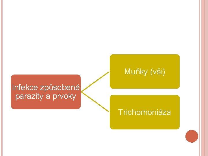 Muňky (vši) Infekce způsobené parazity a prvoky Trichomoniáza