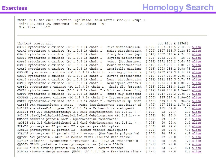 Exercises Homology Search