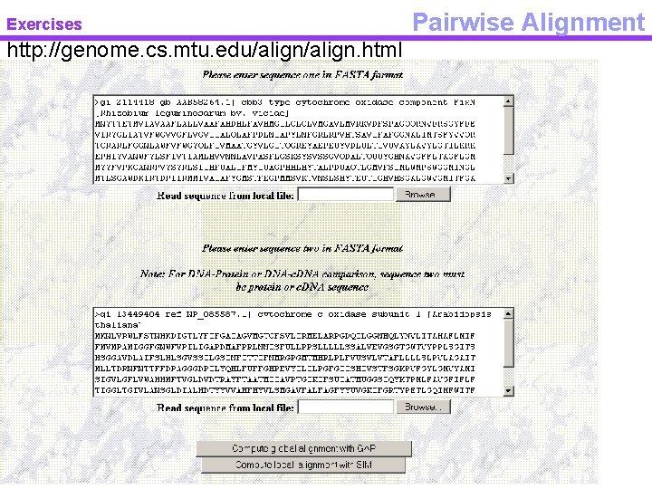 Exercises http: //genome. cs. mtu. edu/align. html Pairwise Alignment