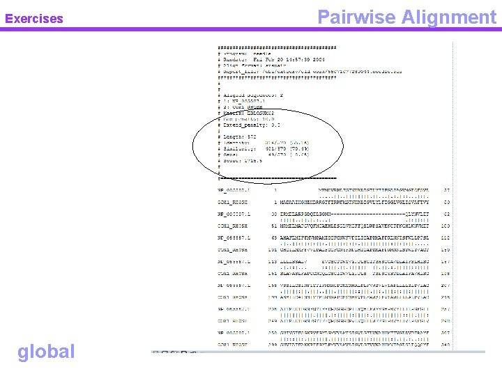 Exercises global Pairwise Alignment