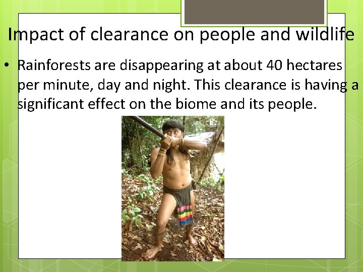 Impact of clearance on people and wildlife • Rainforests are disappearing at about 40