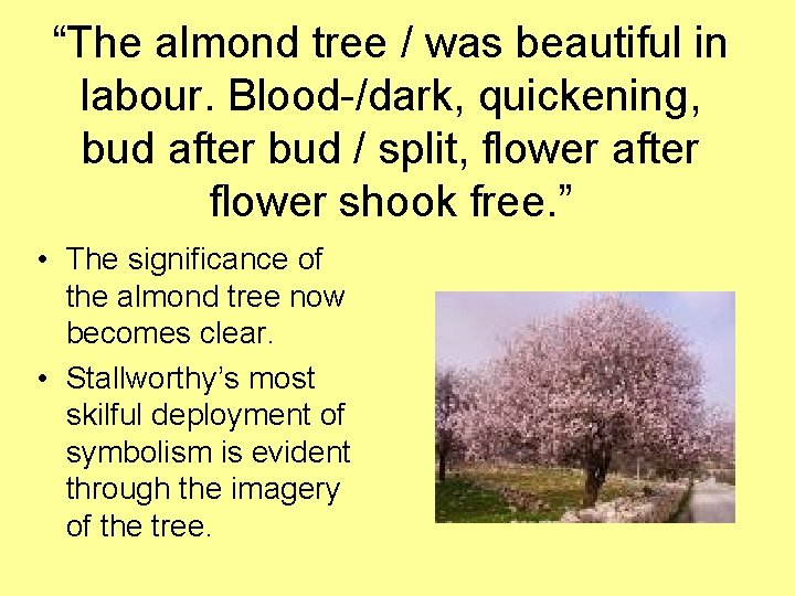 """""""The almond tree / was beautiful in labour. Blood-/dark, quickening, bud after bud /"""