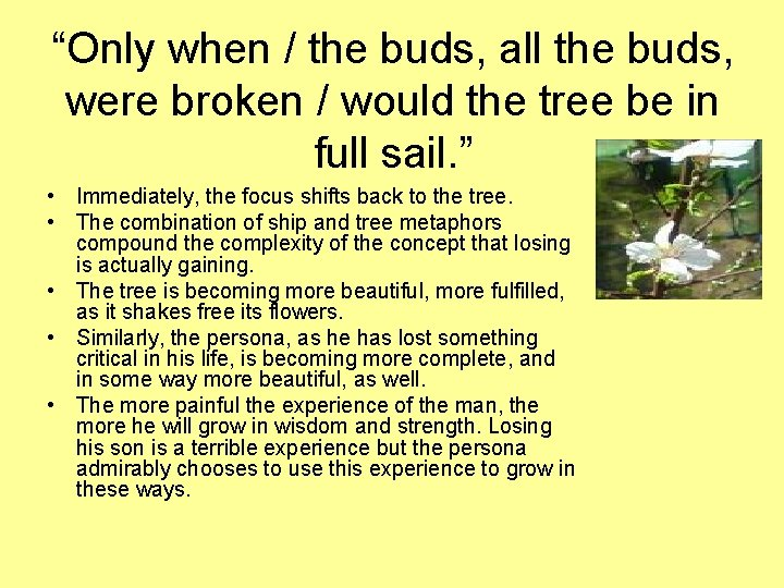 """""""Only when / the buds, all the buds, were broken / would the tree"""