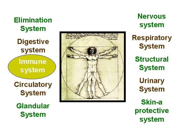 Elimination System Digestive system Immune system System Circulatory System Glandular System Nervous system Respiratory