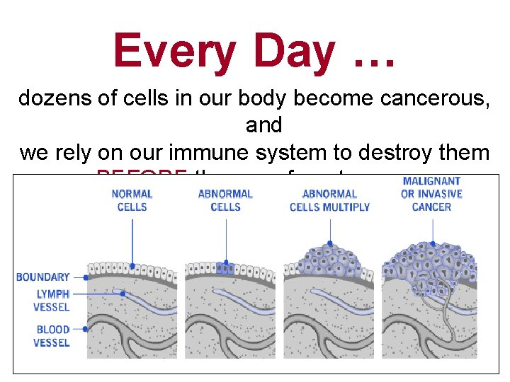 Every Day … dozens of cells in our body become cancerous, and we rely
