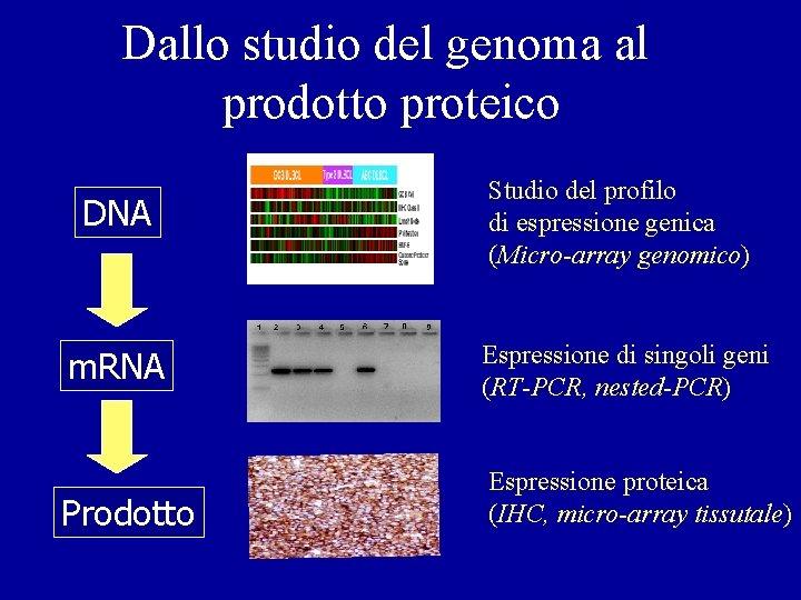 Dallo studio del genoma al prodotto proteico DNA Studio del profilo di espressione genica