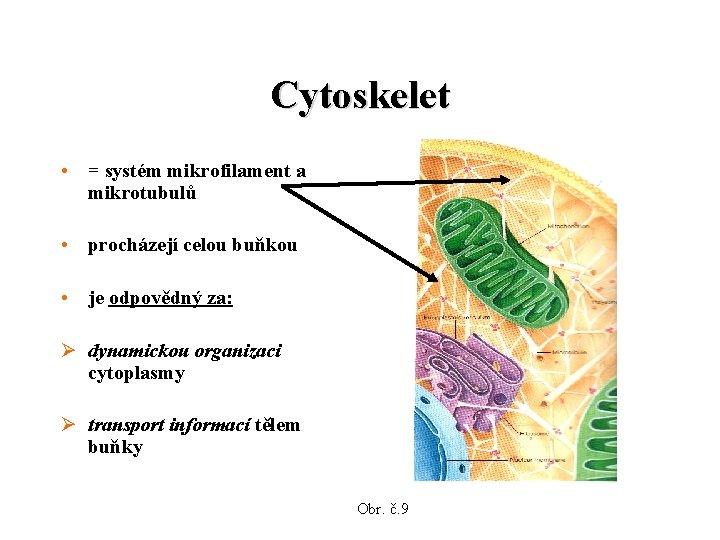 Cytoskelet • = systém mikrofilament a mikrotubulů • procházejí celou buňkou • je odpovědný