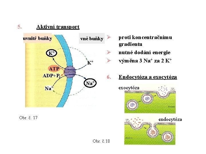 5. Aktivní transport uvnitř buňky vně buňky Ø K+ K+ ATP ADP+Pi Na+ Ø