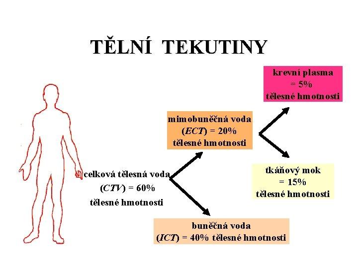 TĚLNÍ TEKUTINY krevní plasma = 5% tělesné hmotnosti mimobuněčná voda (ECT) = 20% tělesné