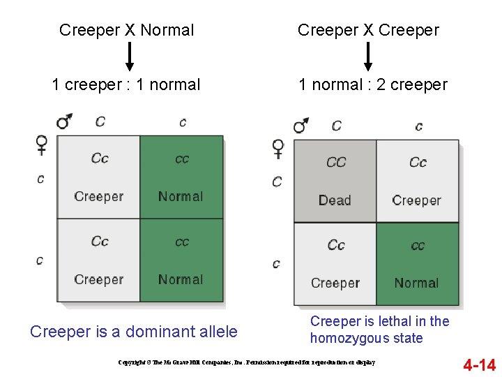 Creeper X Normal Creeper X Creeper 1 creeper : 1 normal : 2 creeper