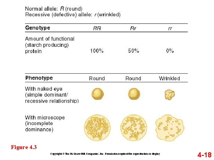 Figure 4. 3 Copyright ©The Mc. Graw-Hill Companies, Inc. Permission required for reproduction or