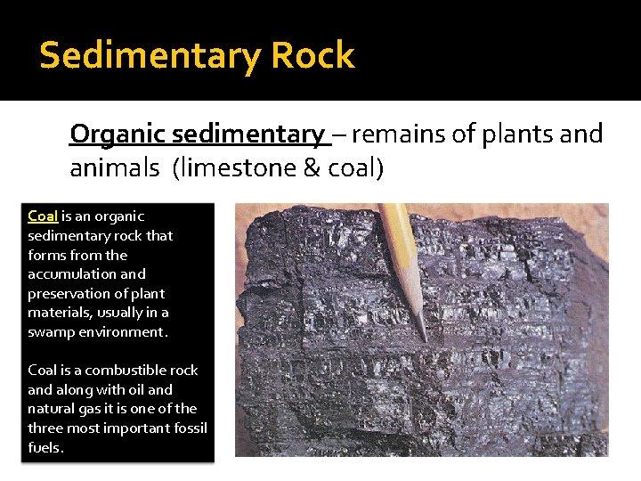 Sedimentary Rock Organic sedimentary – remains of plants and animals (limestone & coal) Coal