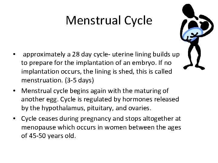 Menstrual Cycle • approximately a 28 day cycle- uterine lining builds up to prepare