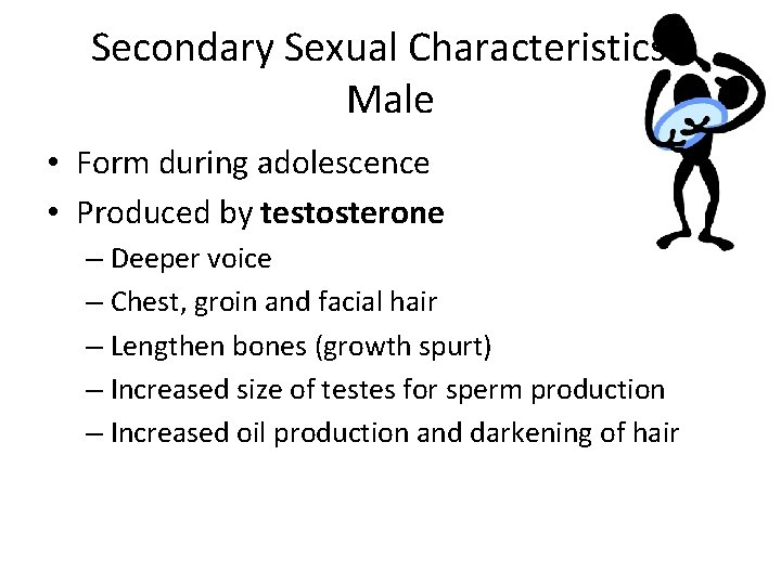 Secondary Sexual Characteristics Male • Form during adolescence • Produced by testosterone – Deeper