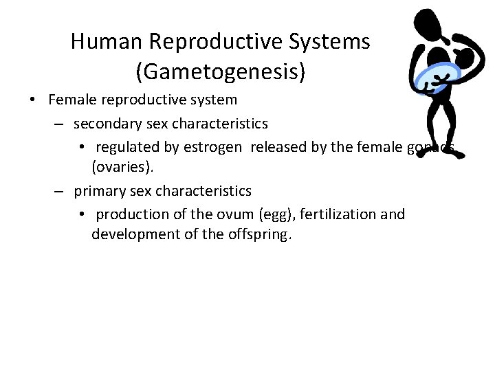 Human Reproductive Systems (Gametogenesis) • Female reproductive system – secondary sex characteristics • regulated