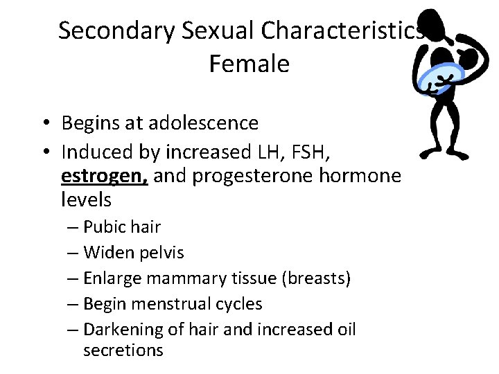 Secondary Sexual Characteristics Female • Begins at adolescence • Induced by increased LH, FSH,