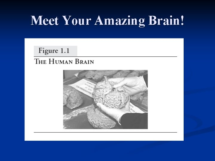 Meet Your Amazing Brain!
