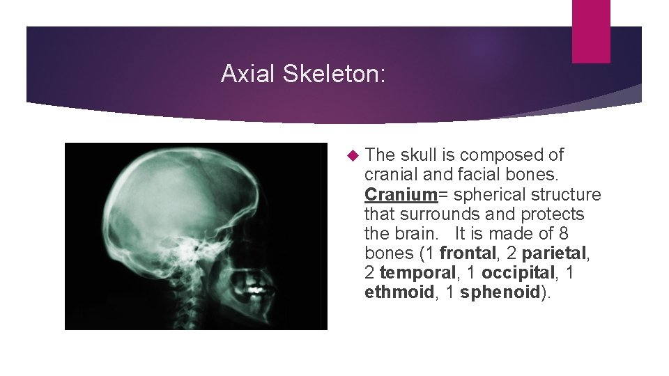 Axial Skeleton: The skull is composed of cranial and facial bones. Cranium= spherical structure