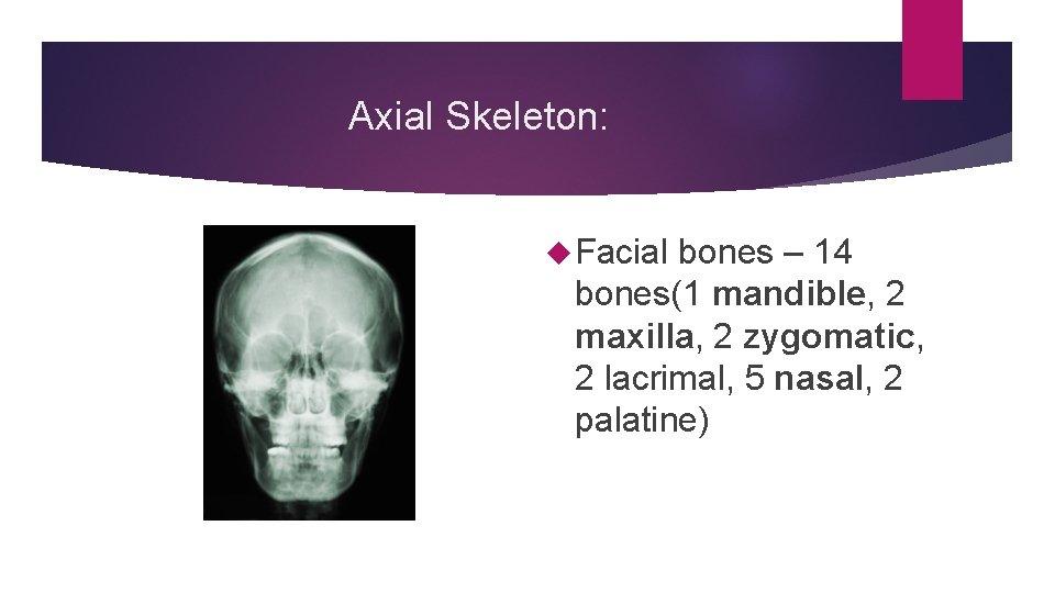 Axial Skeleton: Facial bones – 14 bones(1 mandible, 2 maxilla, 2 zygomatic, 2 lacrimal,