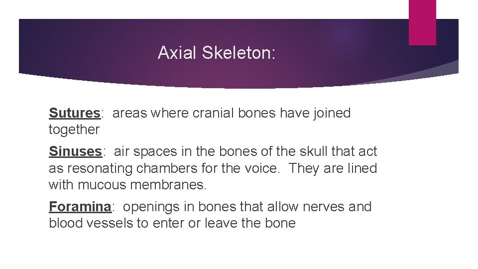 Axial Skeleton: Sutures: areas where cranial bones have joined together Sinuses: air spaces in