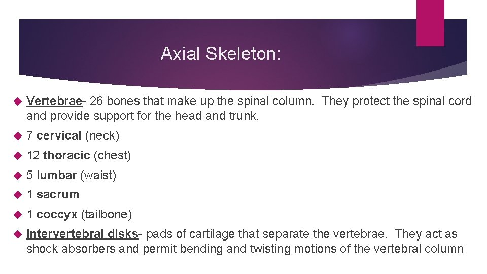 Axial Skeleton: Vertebrae- 26 bones that make up the spinal column. They protect the