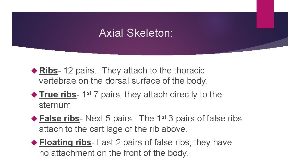 Axial Skeleton: Ribs- 12 pairs. They attach to the thoracic vertebrae on the dorsal