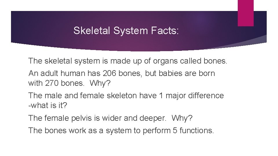 Skeletal System Facts: The skeletal system is made up of organs called bones. An