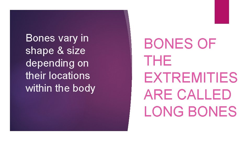 Bones vary in shape & size depending on their locations within the body BONES